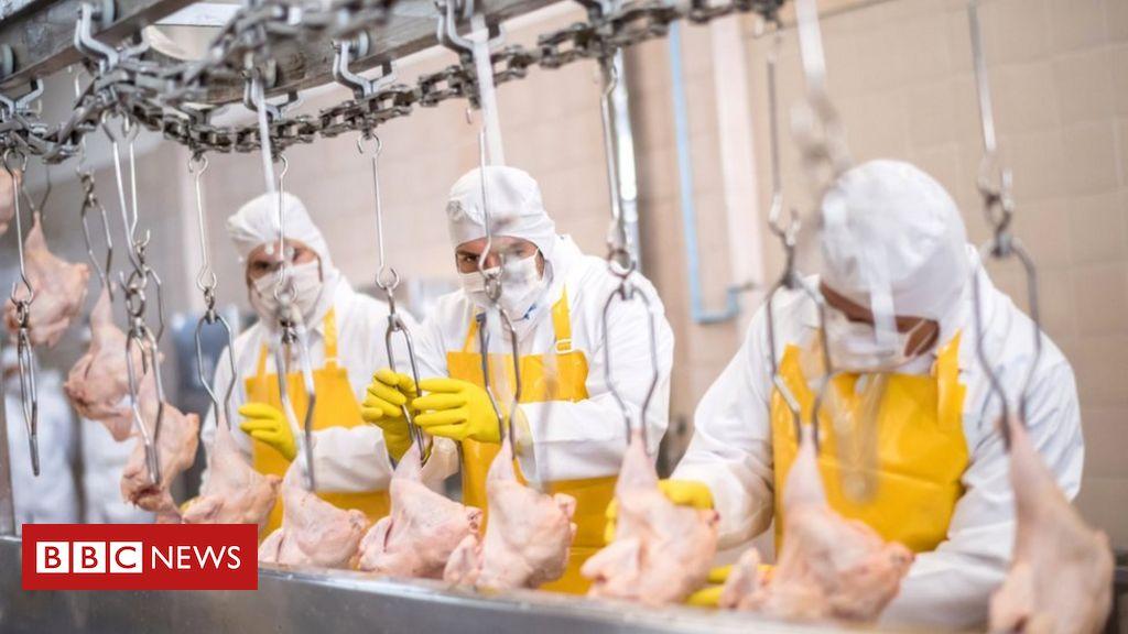 Coronavirus: Warum gab es in Fleischverarbeitungsbetrieben so viele Ausbrüche?