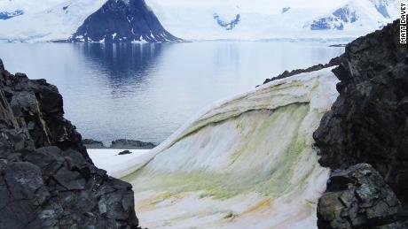 In der Antarktis wird der Schnee grün - und der Klimawandel wird ihn noch schlimmer machen