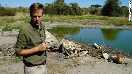 Die Rückkehr Botswanas zur Elefantenjagd wird keine Probleme lösen, sagt Ex-Präsident