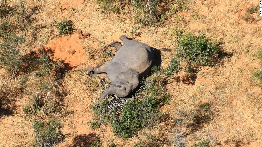 Botswana: Mehr als 360 Elefanten sterben aus mysteriösen Gründen