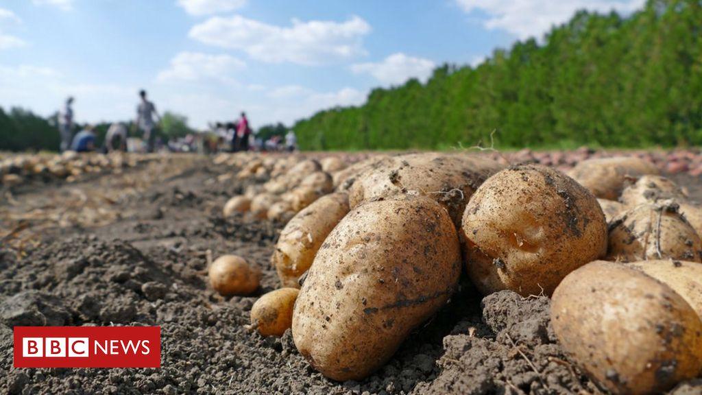 Coronavirus: Mathon-Landarbeiter isolieren nach 73 Fällen