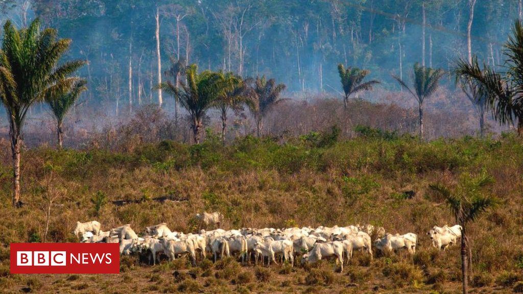 """Amazonas-Soja- und Rindfleischexporte """"im Zusammenhang mit Entwaldung"""""""
