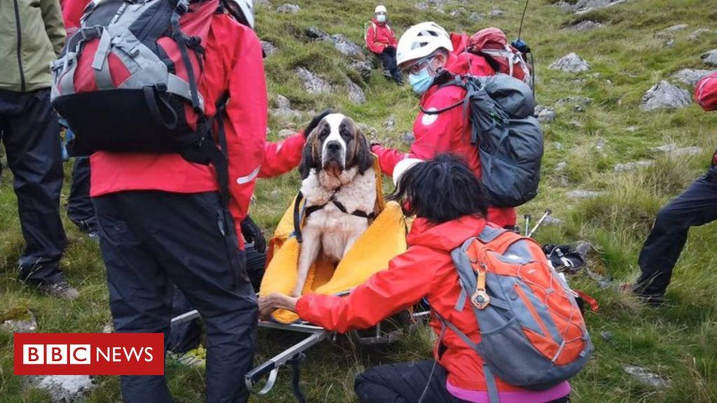 Scafell Pike: Der Spieß umgedreht, als der heilige Bernhard die Rettung der Berge benötigt