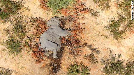 """Von CNN erhaltene Bilder zeigen viele der liegenden Elefanten """"flach auf ihren Gesichtern."""""""