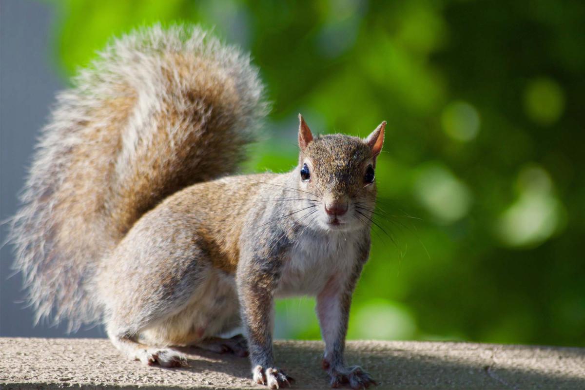Eichhörnchen testet positiv auf Pest in Colorado