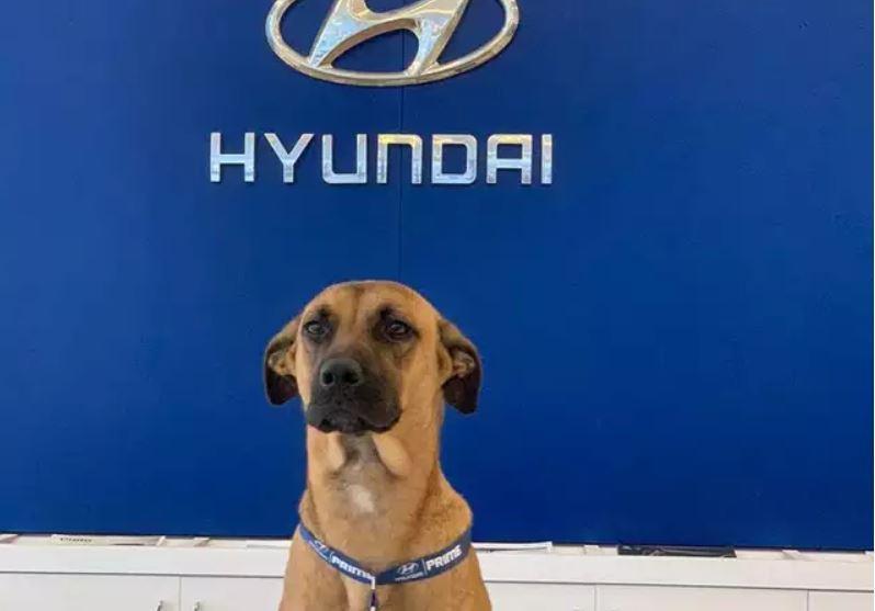Straßenhundemillionär: Treffen Sie den Mitarbeiter des Jahres von Hyundai Brazil