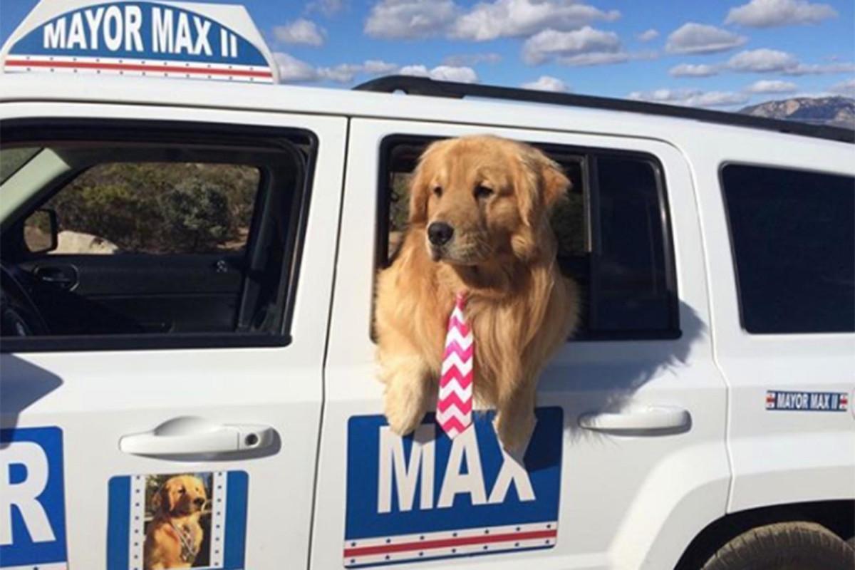 Ein Hund ist seit 8 Jahren Bürgermeister dieser kalifornischen Stadt