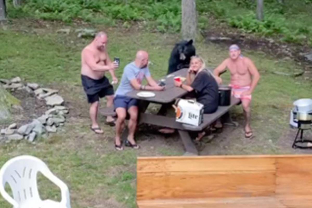 Familie genießt Picknick mit Wildbär als Überraschungsgast