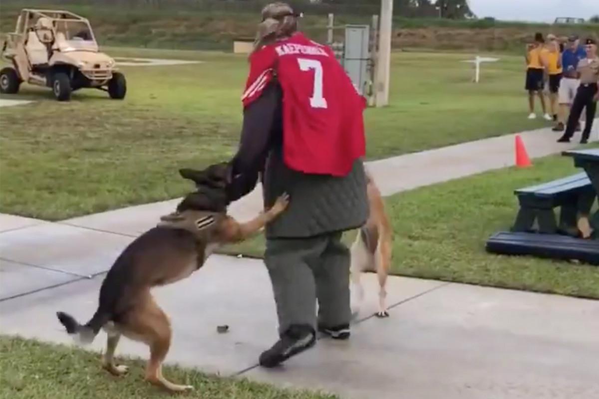 """Navy prüft Ereignis mit Hunden, die """"Ziel"""" im Kaepernick-Trikot angreifen"""