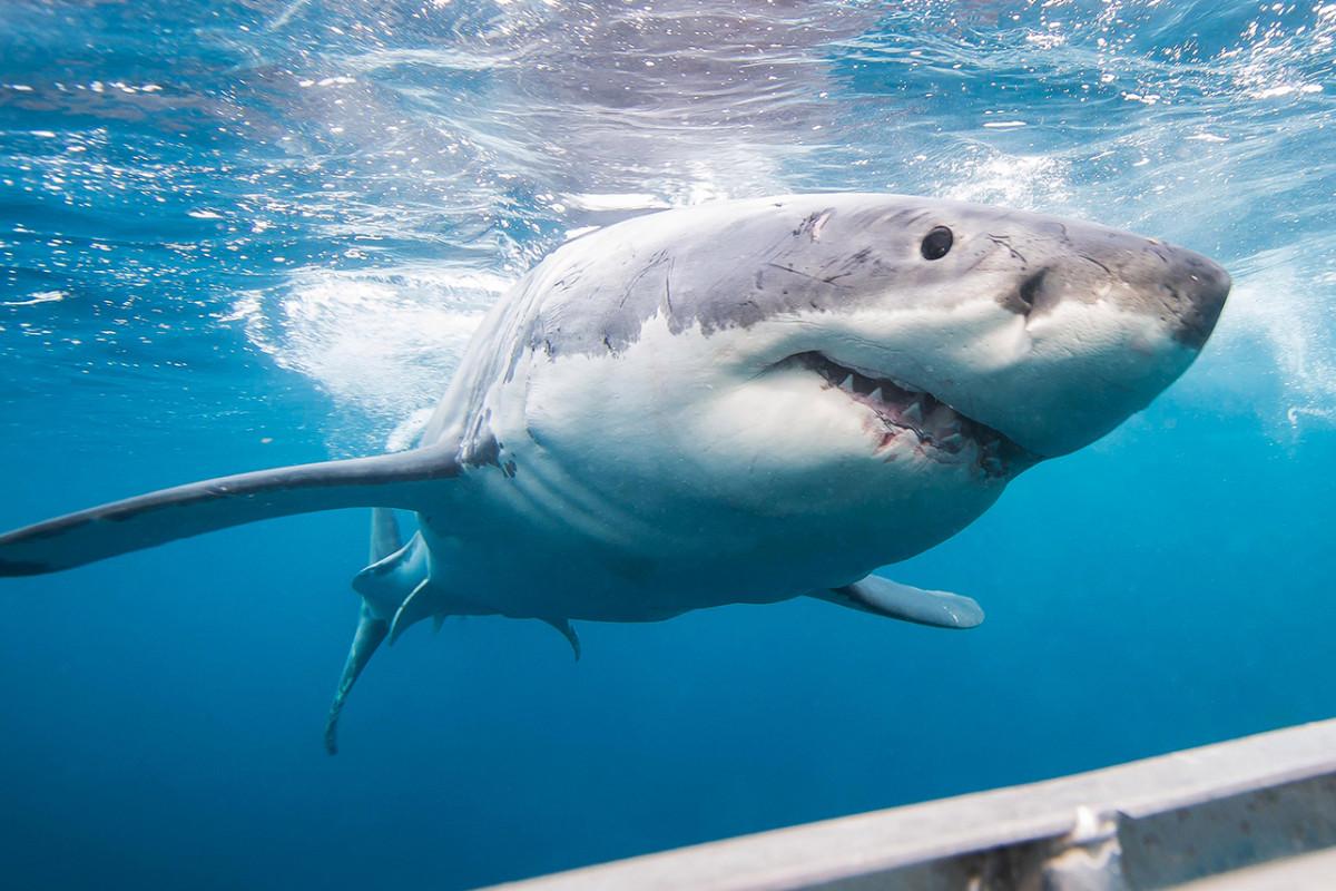 Wie man die Haiwoche 2020 sieht